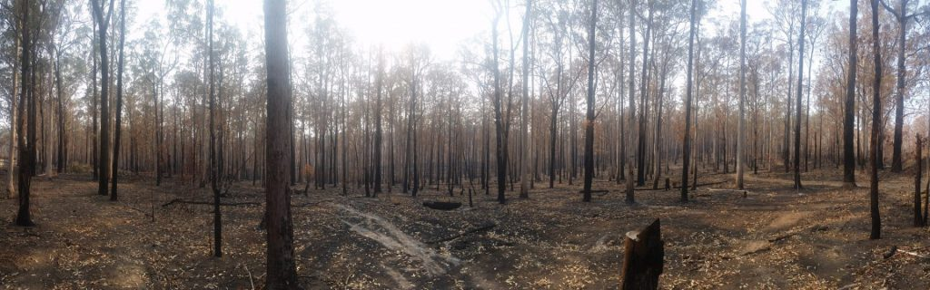 aftermath of the Hillville #fire in Kiwarrak SF south of Taree.