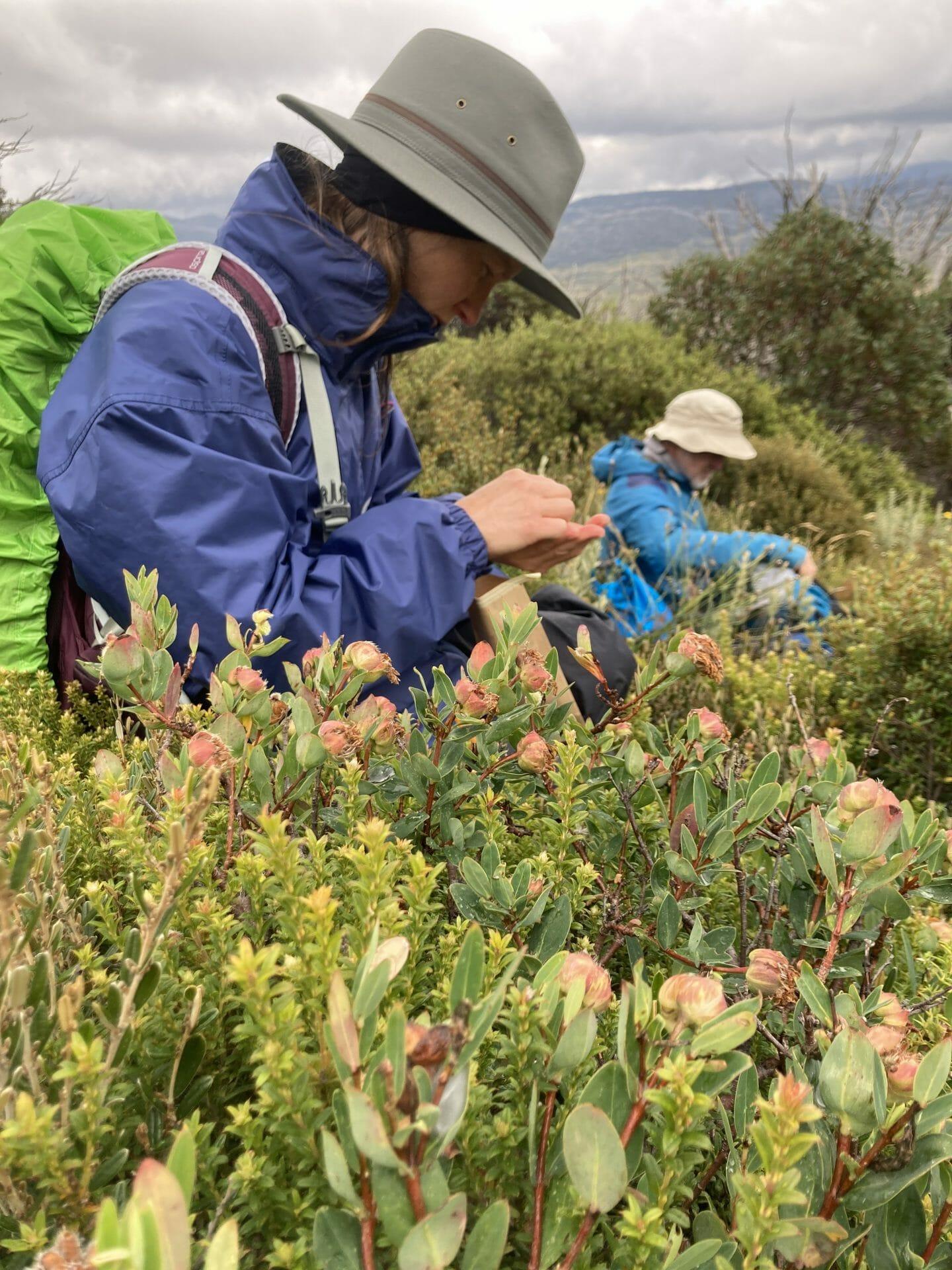 Image of Seed Collectors on Mt Jagungal